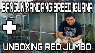 BARU 50%, LIHAT PROSES PEMBUATAN KANDANG BREEDING IGUANA!! ISTIMEWA || Unboxing Jantan SR