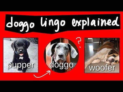 Pupper là gì? Doggo là gì?