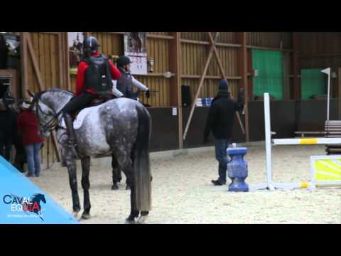 CavalEquia - Reportage William Fox-Pitt