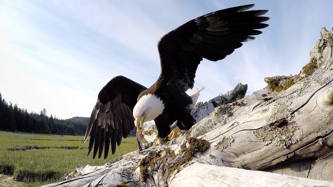 GoPro Awards: Eagle Steals GoPro - YouTube