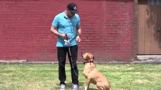 Training Your Dog For Electric Dog Fence System