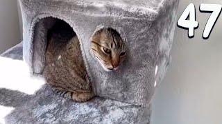 ПРИКОЛЫ С КОТАМИ 2021 Смешные коты собаки и другие животные