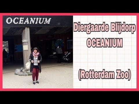 Diergaarde Blijdorp Rotterdam Zoo (OCEANIUM)