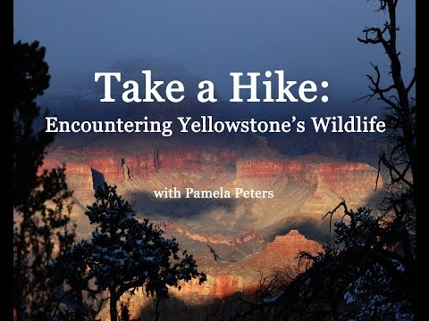 Take a Hike: Encountering Yellowstone's Wildlife