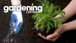 Planting A Tree - How to plant a tree