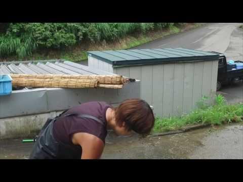 Koda Koi Farm - A short film by JKX