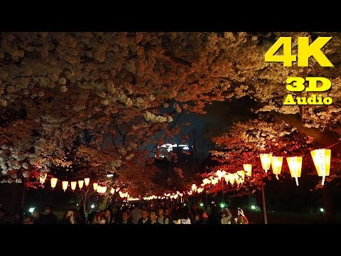TOKYO.| 上野公園 桜.| Ueno Park SAKURA 2018. [ 4K. Binaural Audio]