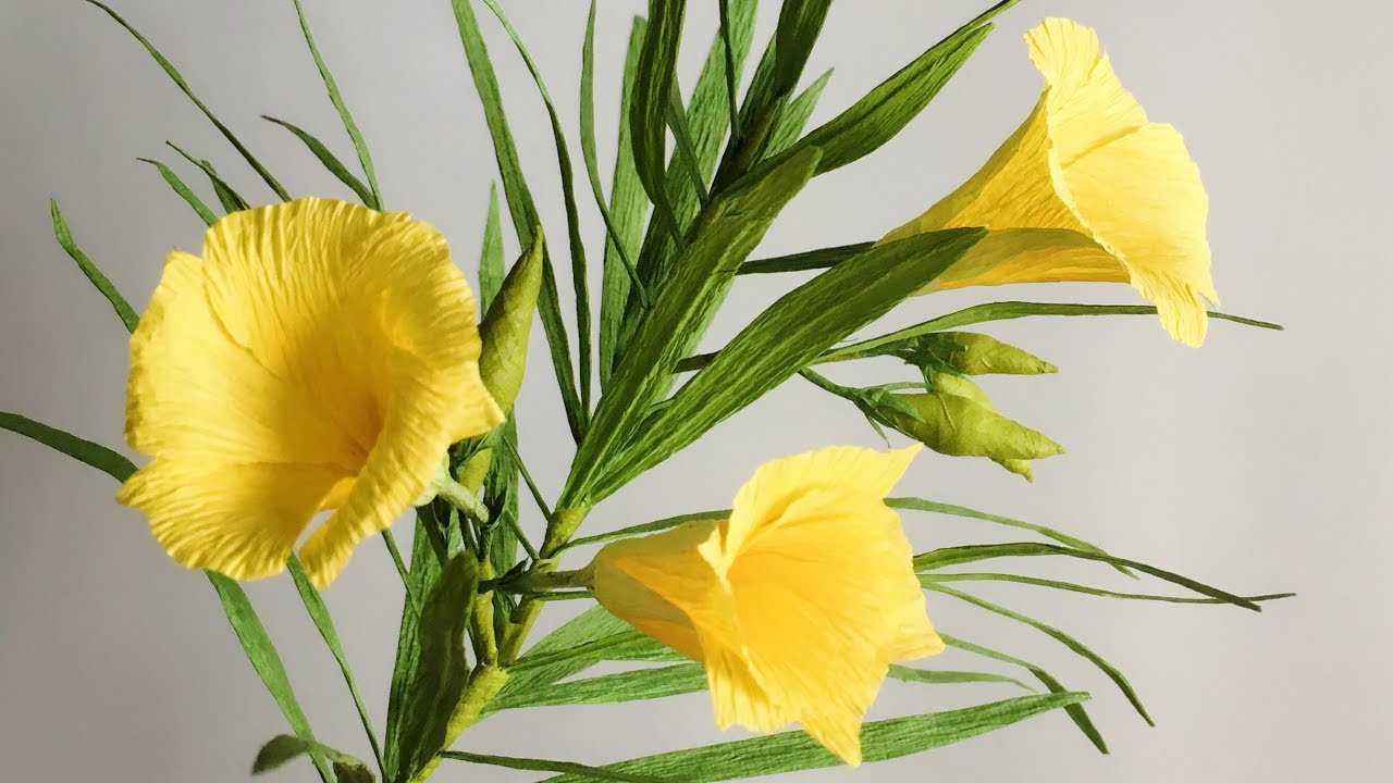 Abc Tv How To Make Yellow Oleander Paper Flower From Crepe Paper