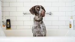 5 Best Things about German Shorthaired Pointers