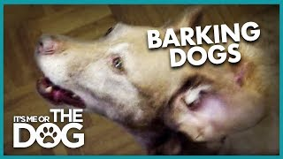 How to Stop Your Dog from Barking | It's Me or the Dog