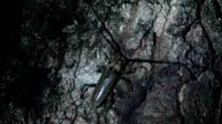 夜の森の中はいろんな昆虫がいてエキサイティング。ひさし振りに大きな...