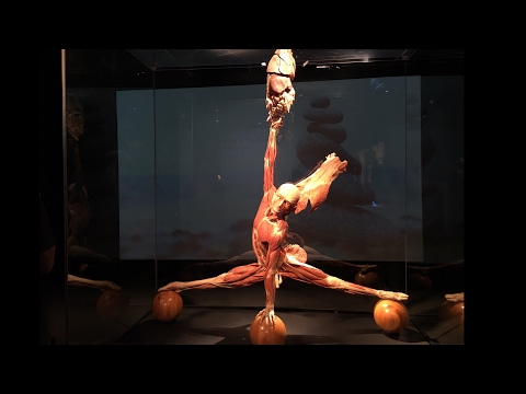 Body Worlds Pulse, Los Angeles 2017 California Science Center