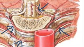 Anatomía de las arterias del cuerpo humano
