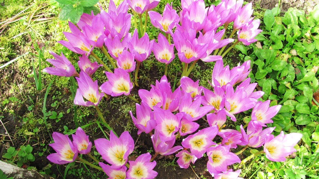 Порча через цветы