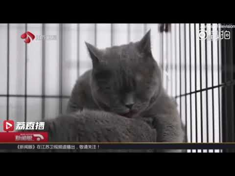 Chinese pet owner gets plastic surgery for her 'too ugly' cat