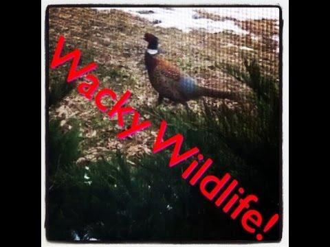 Wacky Wildlife Vlog 23!