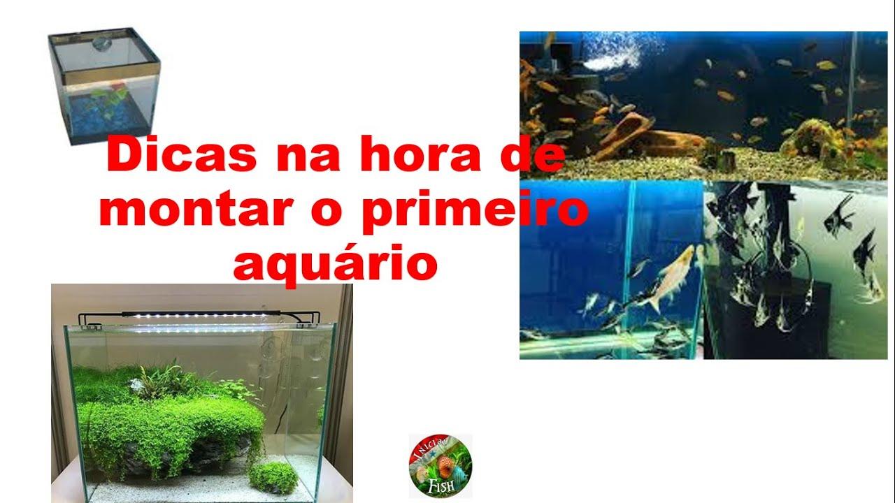 Iniciando no aquarismo, dicade escolha de peixes, rações, texte de PH e amônia e filtragem