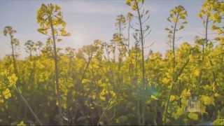 Pilgrim Song - Mormon Tabernacle Choir