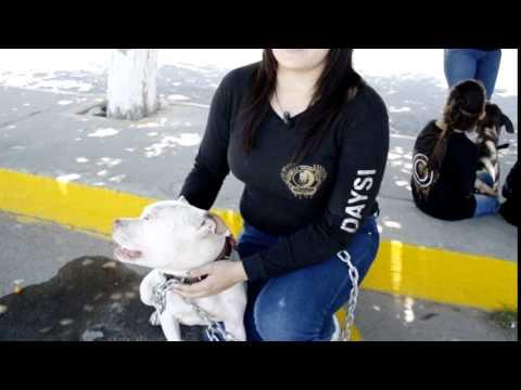 Coalition pitbull sport club (entrevista)