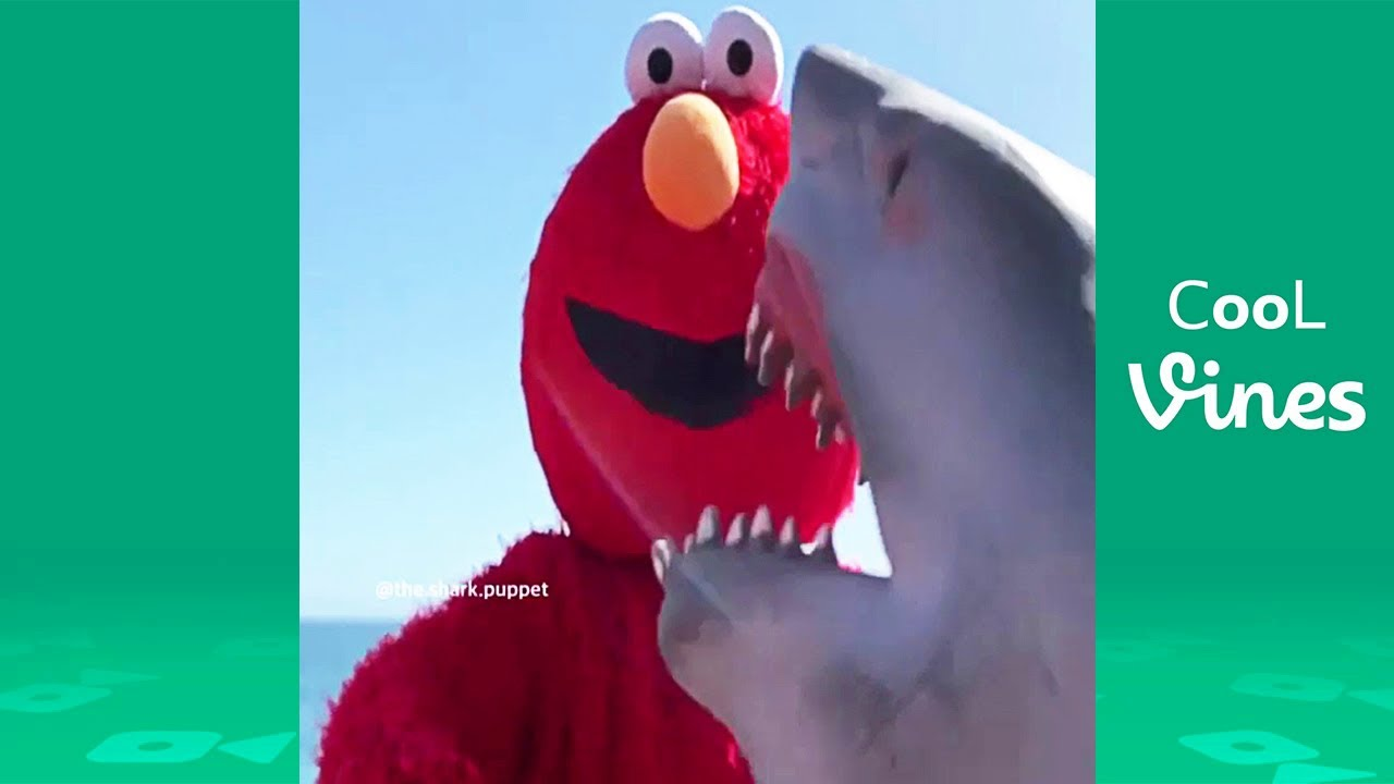Shark Puppet Beyond Vine Funny Shark Puppet Instagram Videos