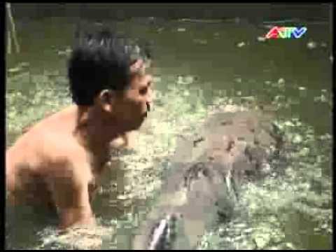 An Giang: Bắt cá tra dầu 71kg