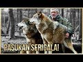 Pemimpin Pasukan Serigala? Gokil 5 Persahabatan Hewan Dan Manusia Yang Bikin Kita Nganga