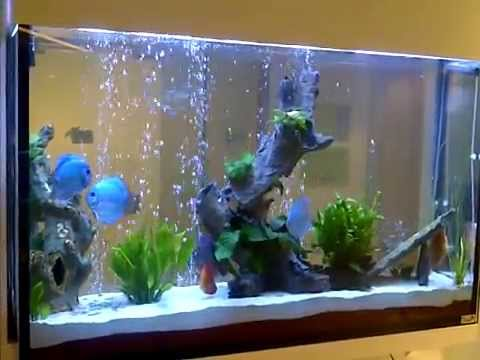 acuario 700 litros youtube