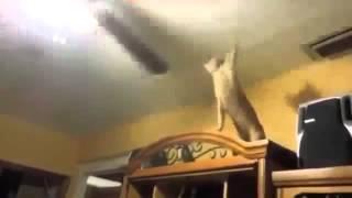 Коты умнички. Прикол.