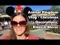 Animal Kingdom Vlog | Christmas Decorations, Rides, and More | Walt Disney World