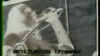 Mütiilation - Transylvania