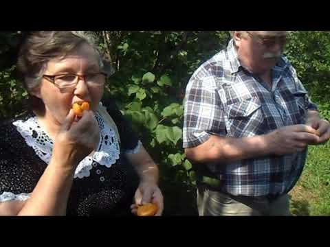 Райский сад Железова 2015 - Ждём изменения климата!