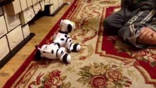 Робот собака Zoomer игрушка