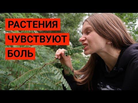 Растения чувствуют боль! Аргументы против Веганства #4