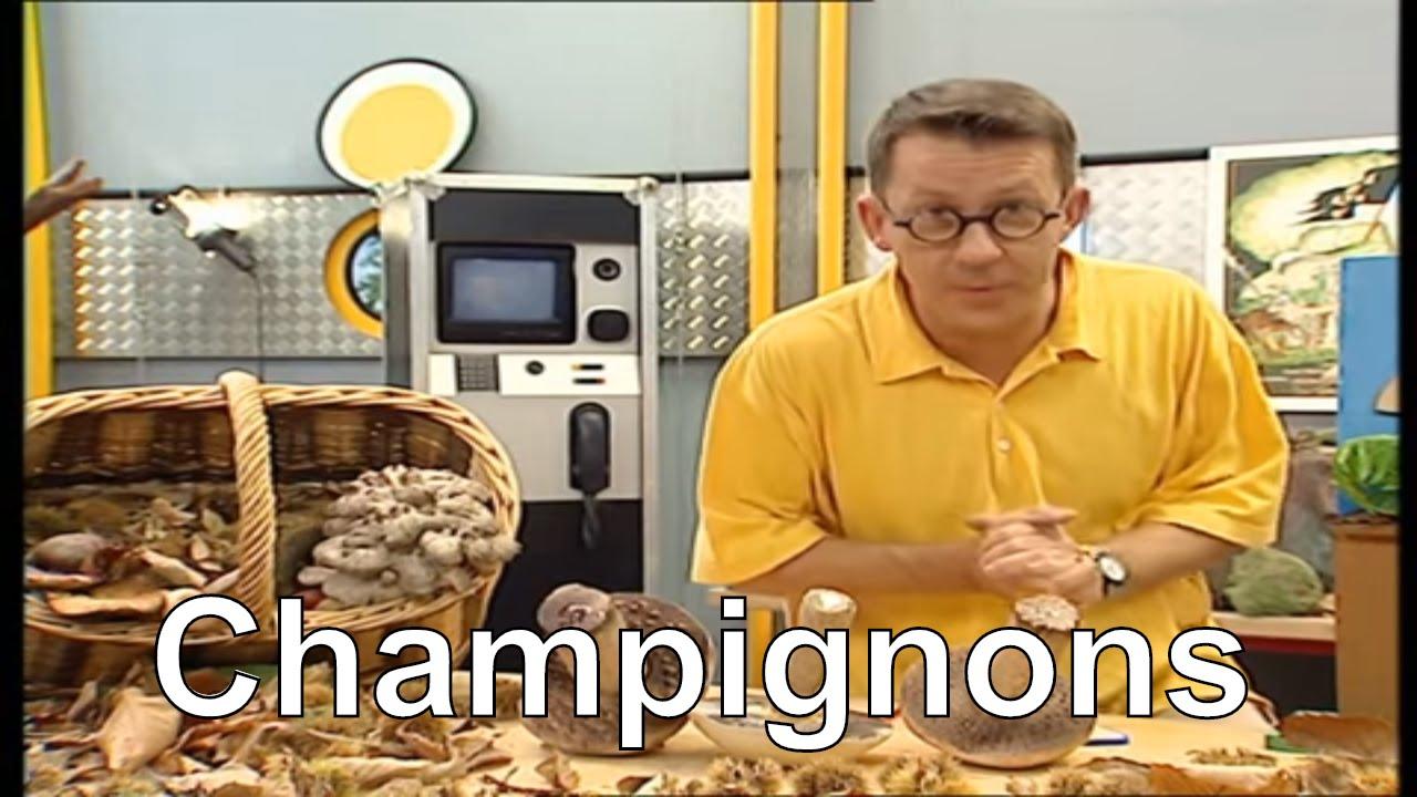 Comment se reproduisent les champignons c 39 est pas - Champignons secs comment les cuisiner ...
