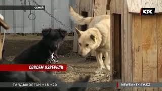 Неизвестный обезглавил и выпотрошил щенка прямо в приюте для животных