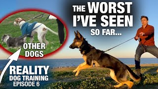 Why I refuse to use a prong collar on this TOTALLY UNTRAINED DOG. Reality Dog Training