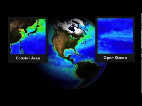 Dead Zones Come Alive in the Gulf of Mexico