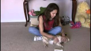 Puppy Training-Why Do Puppies Bite So Much How to Stop Puppy Biting and Nipping