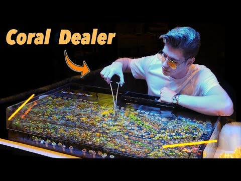 Growing Coral - a LEGAL way to make millions?! 💰 (Nas Daily)