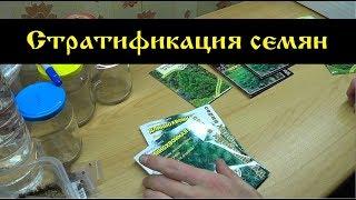 Стратификация семян кипариса,сосен, можжевельников .