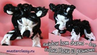 Rainbow loom charms - dog. Собака Хаски из резиночек