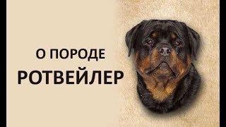 О породе РОТВЕЙЛЕР. Интервью. Васильева М. Н. и Деркач А. А.