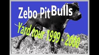 ZEBO Pit Bulls  Yard Tour  1999  2000 (part 1)
