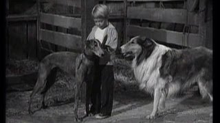 "Lassie - Episode 124 - ""The Greyhound"" - Season 4, #21  (1/26/1958)"
