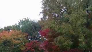 2014/10 Japan scenery autumn leaves 岩手県北上市 図書館 紅葉