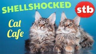 SHELLSHOCKED Cat Cafe in Tokyo // BEST Animal Cafe in Japan