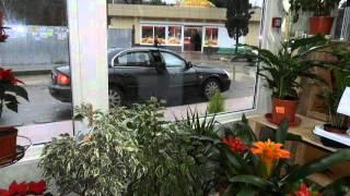 Новый Магазин Цветов дагомыс Гайдара 4 А(, 2012-01-29T06:34:47.000Z)