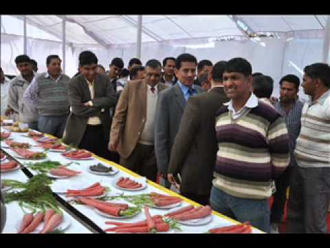 Vegetables Fair-2