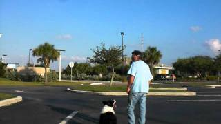 Remote Collar Training,dog Training Guy.com