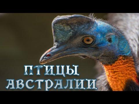 Дикие птицы Австралии - Подготовка гнезда. Мир природы дикие животные. #Документальный фильм. Nature - Видео онлайн